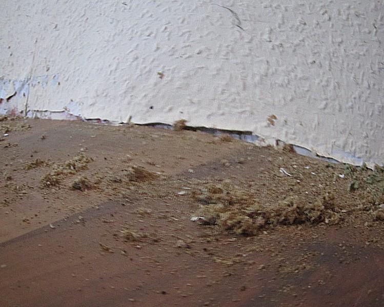 ameisenbek mpfung wichtiges ber die bek mpfung von ameisen. Black Bedroom Furniture Sets. Home Design Ideas