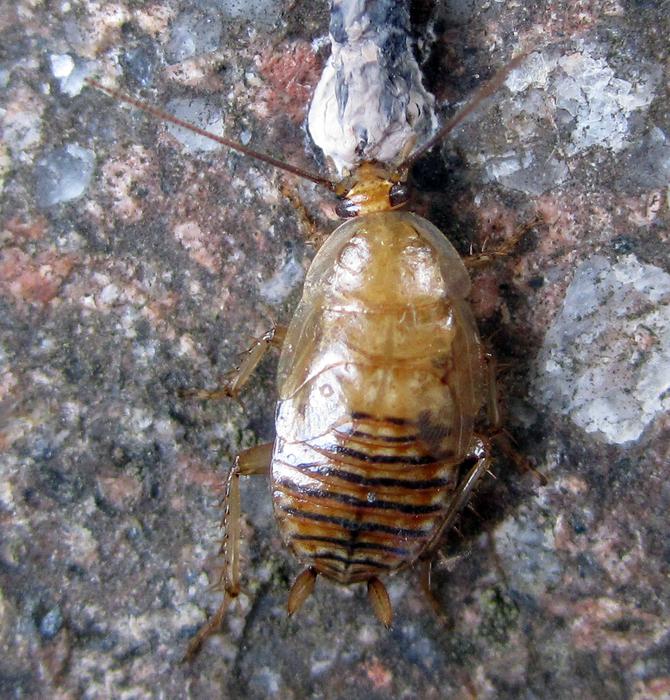 was f r ein tier k fer viech ist das tiere insekten. Black Bedroom Furniture Sets. Home Design Ideas