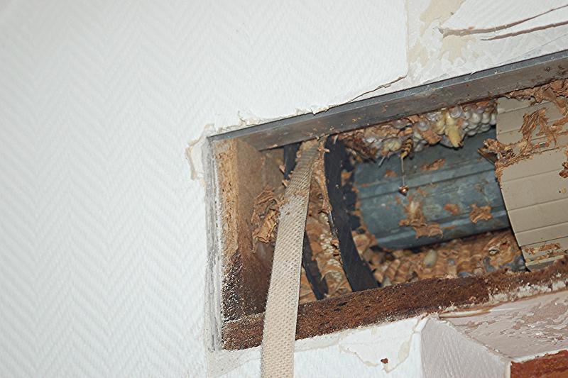 Wespennest im rolladenkasten wespennest im rolladenkasten - Insekten im zimmer was tun ...