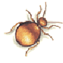 Messingkäfer (Niptus hololeucus)