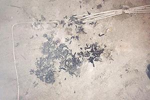 Marderkot auf dem Dachboden